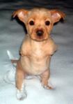 05272013 faith pup